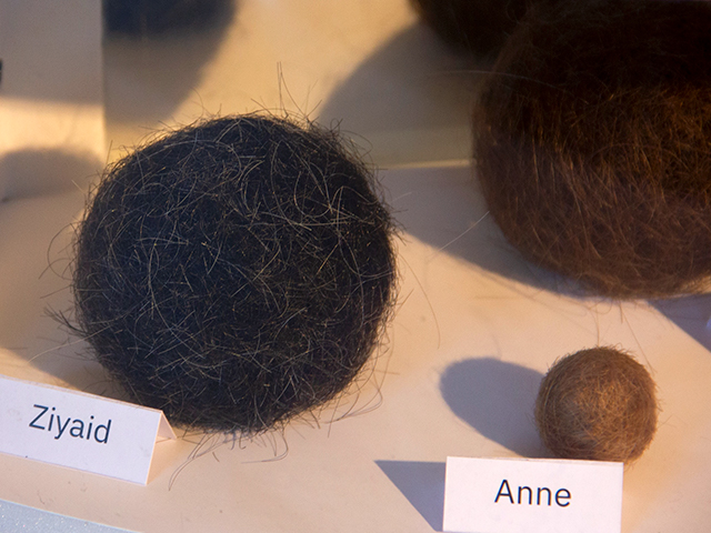 closeups of hairballs showcase
